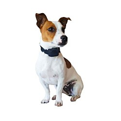 /uploads/fc/2d/fc2dd06ede3d5db63e6e1a51a1575668/thumb-canifugue-small-pet-fencing-receiver-collar1.jpg
